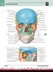 Netter Atlas of Human Anatomy (pdf)